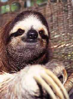 This is a sloth, by the way. It's a pun.